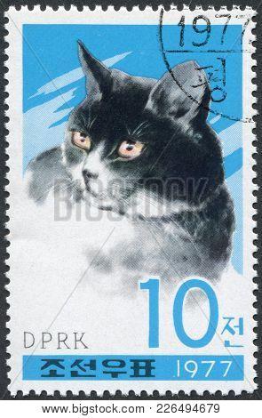 North Korea - Circa 1977: A Stamp Printed In North Korea, Shows A House Cat, Circa 1977