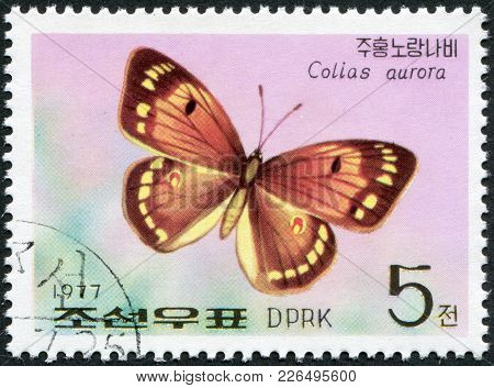North Korea - Circa 1977: A Stamp Printed In North Korea, Shows A Butterfly The Greek Clouded Butter