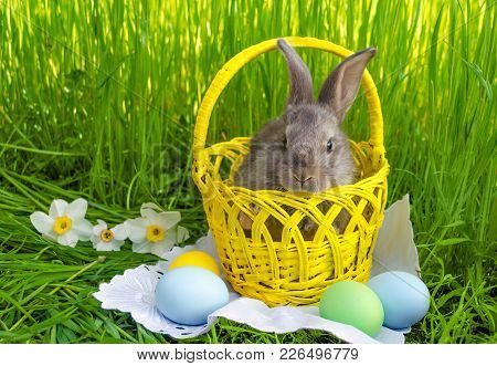 Easter bunny in Easter basket with easter colored eggs on grass background with white flowers. Easter bunny with Easter basket. Easter bunny egg hunt. Farm bunny. Easter Bunny card. Easter Bunny concept.