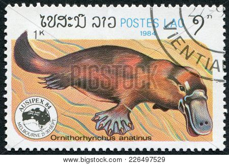 Laos-circa 1984: A Stamp Printed In The Laos, Depicts The Platypus (ornithorhynchus Anatinus), Circa