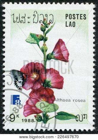 Laos-circa 1988: A Stamp Printed In The Laos, Depicts A Flower Althaea Rosea, Circa 1988