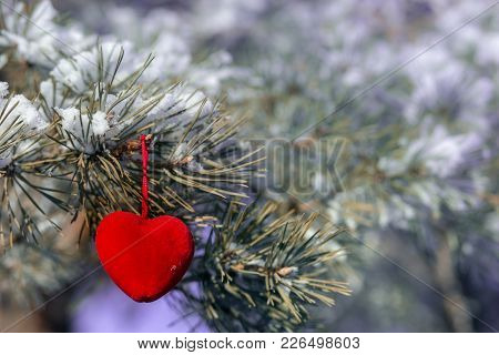 Decorative Heart On Snow-covered Fir Branch.valentine Day Card. Winter Holidays. Valentines Theme.