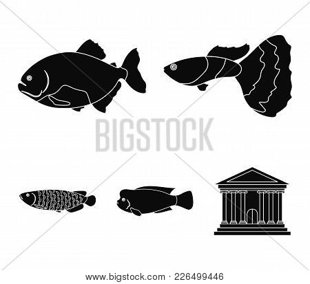 Frontosa, Cichlid, Phractocephalus Hemioliopterus.fish Set Collection Icons In Black Style Vector Sy