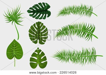 Set Collection Isolated. Tropical Background Vector Palm Leaf. Exotic Summer Green Jungle Tree. Hawa