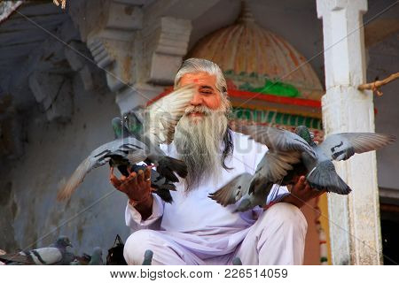 Pushkar, India - February 23: An Unidentified Man Feeds Pigeons Near Holy Lake On February 23, 2011