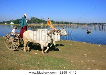 Amarapura, Myanmar - December 31: Unidentified People Ride In An Ox Cart On December31, 2011 In Amar