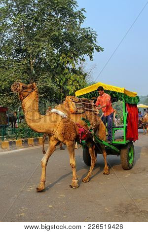 Agra, India - November 8: Unidentified Man Drives Camel Cart For Tourists In Taj Ganj Neighborhood O
