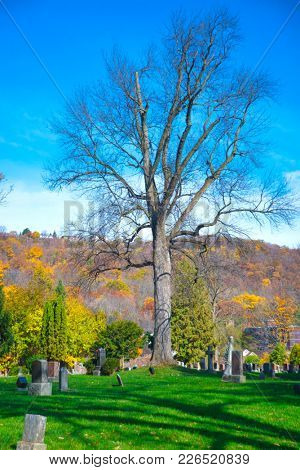 Beautiful oak tree stading alone in a cemetery in Northern Ontario during the fall