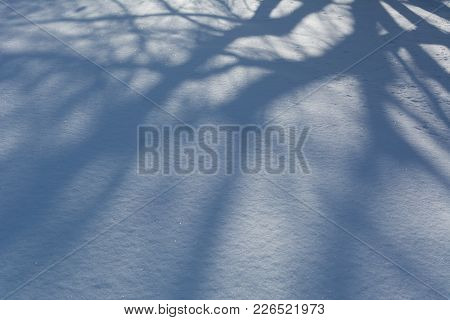 Winter Background. Shade Of Tree Silhouette On A Snow