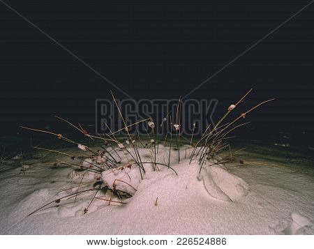 Dry Grass Is Covered With Snow. The Grass Is Covered With Snow. Beautiful Winter