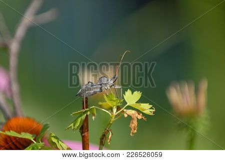 A Wheel Bug Perched On Top Of A Native Plant, With A Green Background.