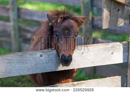 Portrait of a pony in the stable