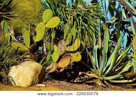 Drought Tolerant Landscaping Including Cacti Plants Taken In A Residential Garden