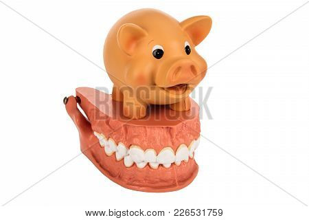 Human Dentures Model With Piggy Bank Isolated On White Background - Concept Dental Care Costs