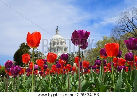 US Capitol in springtime - Washington DC United States