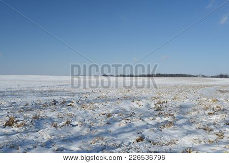 Snow Covered Vast Open Farm Land Field In Winter Covered With Snow Under A Clear Blue Sky
