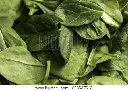 A Bed Of Green Spinach Shot Close Up With A Macro Lens