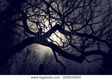 The Moonlight Glowing Around Tree Branches In A Gothic Setting.