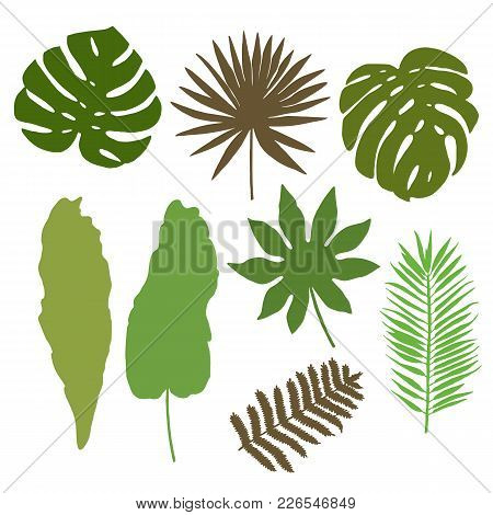 Floral Set. Collection With Tropical Silhouettes Of Leafs. Design For Invitation, Wedding Or Greetin