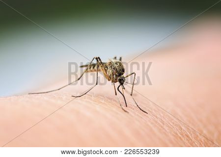 Nasty Insect Mosquito Sitting On Her Hand And Drinks The Blood Of The Pierced Skin