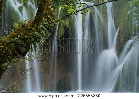 Covered With Fern And Moss Green Tree Trung Against Waterfalls Background. Scene In Plitvice Lakes N