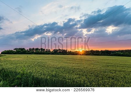 Landscape With Green Ripening Ears Of Wheat Field Under Cloudy Sky At Sunset. Agricultural Natural P