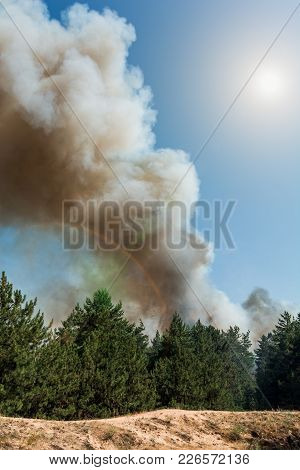 Forest Fire Burning, Wildfire Close Up At Day Time.