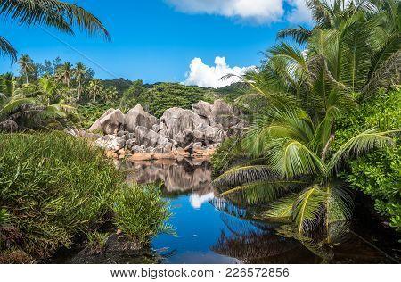 Lake In The Jungle, La Digue Island, Seychelles