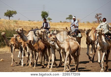 MEROE, SUDAN - JANUARY 12: Sudanese men ride camels on January 12, 2010 in rural area near Meroe. Sudan remains one of the least developed countries in the world.