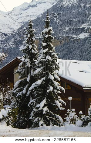 Snowy Pair Of Christmassy Trees In Front Of A Chalet, With Mountains Covered By A Forest On The Back