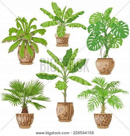 Potted Tropical Plants Set.  Palm Trees, Banana Plant, Washingtonia, Monstera In Flowerpots Isolated