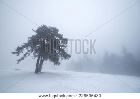 Frozen Tree In Winter Landscape At Fog.