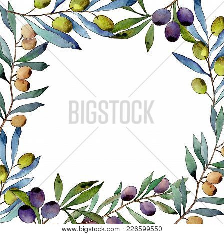 Olive Tree Frame In A Watercolor Style. Full Name Of The Plant: Branches Of An Olive Tree. Aquarelle
