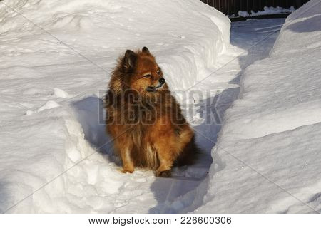 A Dog On The Street In Winter. Portrait Of A Beautiful Dog. Photo Dog Close-up. Winter Dog On The St