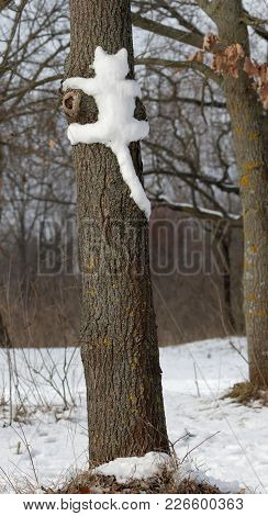 Snow Cat On A Tree In  Park In  Kiev Cute Cat On The Tree.   Cat Outdoors. Wild Cats In Nature. Silh