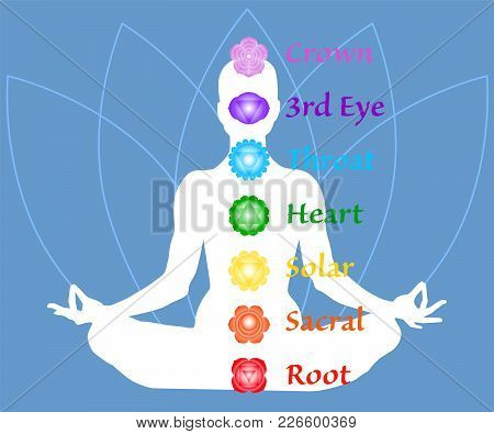 The Seven Chakra Names Map. Famale Body In Lotus Yoga Asana On Blue Petals Background. Root, Sacral,