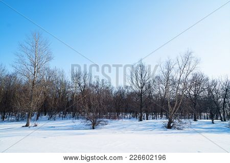 Winter Landscape. Winter Forest Against The Blue Sky