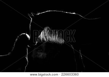 Contour Of Two Horses With Long Mane And Steam From A Mouth At A Black Background With Back  Lightin