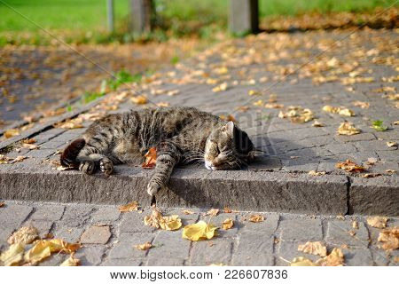 The Cat Resting In A Fall Afternoon
