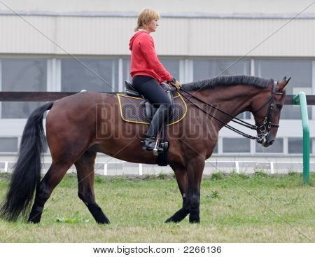 The Young Woman Goes On The Horse