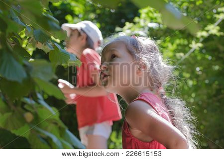 Two Siblings Playing Hide-and-seek Among Common Hazel Bush Hedgerow In Summer Wood