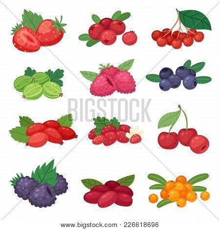 Berry Vector Berrying Mix Of Strawberry Blueberry Raspberry Blackberry And Red Currant Illustration