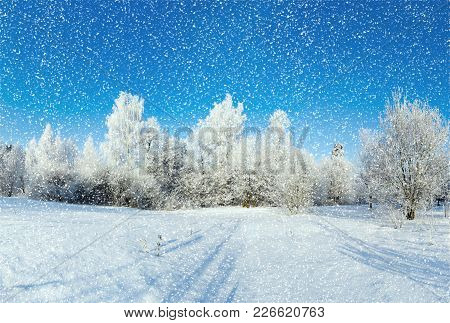 Beautiful Winter Forest On A Sunny Day