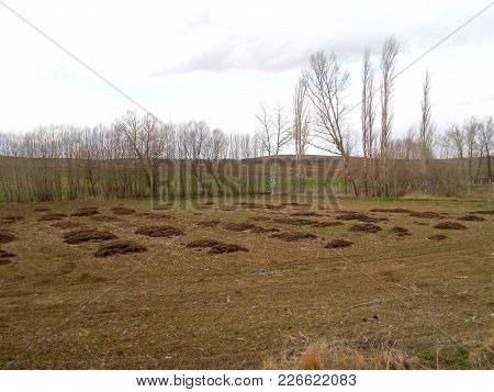 Pouring Animal Manure Into Agricultural Areas, Animal Fertilizers