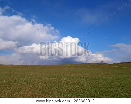 wheat and barley plants in agricultural areas, agricultural areas in continental climate,