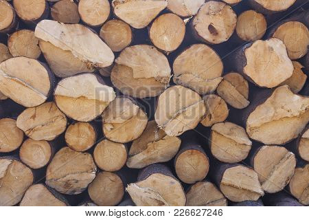 Storage Of Logs. Collapsed Tree Trunks