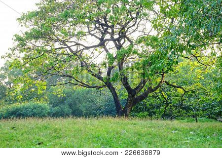 A Tropical Tree With Leaf Branch At The Park And Grassland On A Hill With Warm Light