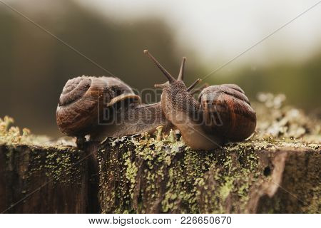 Two Escargot Cuddling On The Stump For Any Purpose