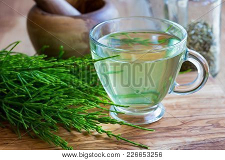 A Cup Of Horsetail Tea With Fresh Horsetail Twigs