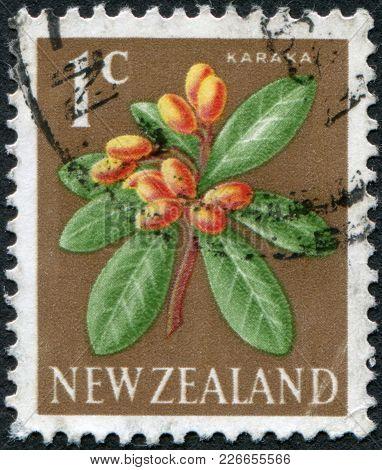 New Zealand - Circa 1960: A Stamp Printed In New Zealand, Shows A Flowering Karaka (corynocarpus Lae